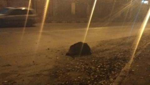 Кабана в Энгельсе пришлось застрелить из-за сломанного позвоночника. Видео 18+