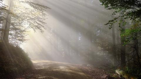 Сегодня в Саратовской области ветрено и туманно