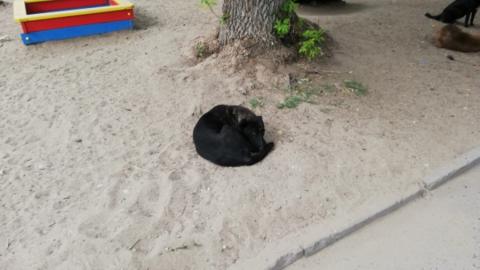 Работники «Дорстроя» стреляли собак вместо их отлова