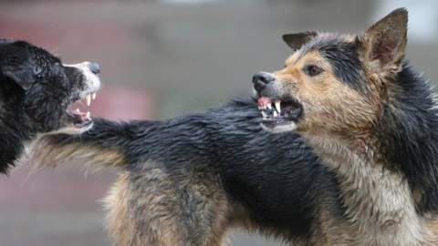 Россиянам отсоветовали кормить бездомных собак