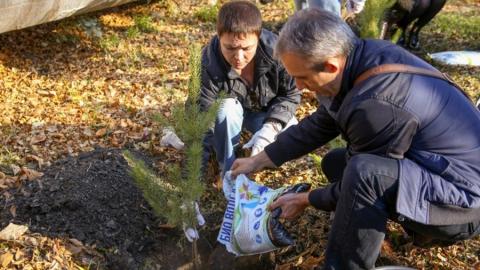 Коммунальщики высадили более 30 деревьев в скверах Саратова