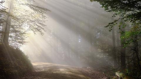 Сегодня будет туманно, вечером в Саратове обещают ливень