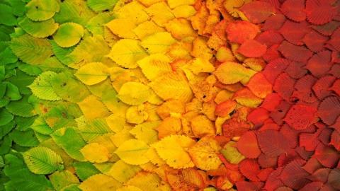 «МК в Саратове» приглашает на праздник «Музыкальные краски осени»