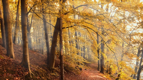 Погода располагает к походу в лес