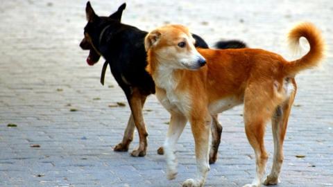 В Балакове стаи бродячих собак оккупировали микрорайон 4Б