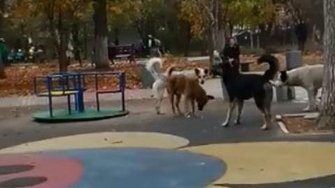 Cтая бродячих собак напугала детей на площадке. Видео