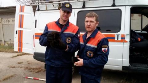 Балаковские спасатели достали котенка из трубы