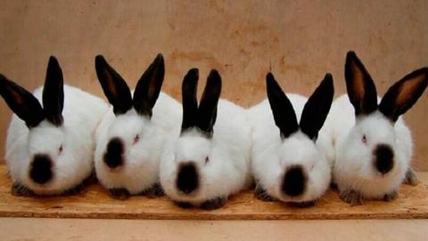 В Саратовской области сгорели 10 тысяч кроликов