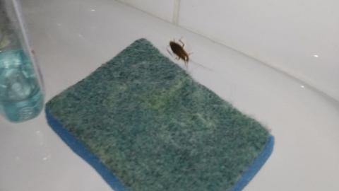 Минздрав оперативно отреагировал на сообщение о тараканах в больнице №12
