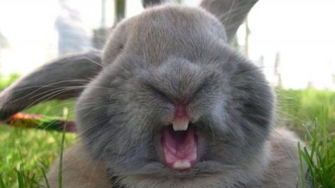 Пожар на кролиководческой ферме начался из-за неисправного электрооборудования