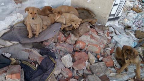 Восемь брошенных щенят ждут своей судьбы у заброшенного дома на шоссе