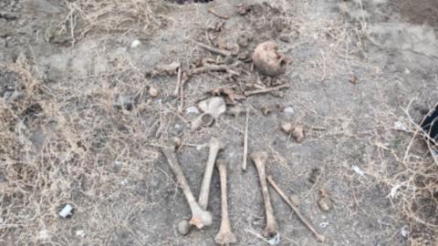Скелет человека нашли под Аткарском