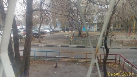 Жителей Заводского района беспокоит стая бродячих собак