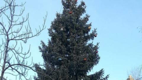 Новогодняя елка на Театральной площади обойдется в три миллиона рублей