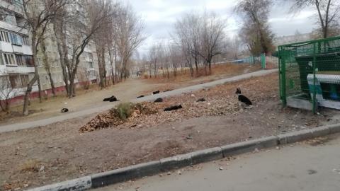 Стая бродячих собак пугает саратовцев
