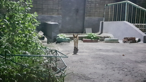 Ночью в Парке Победы в Саратове заметили лису. Видео