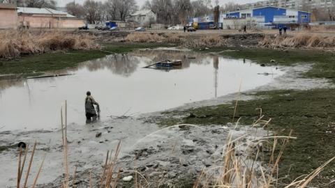 Из пруда в сквере Марины Расковой рыбу вылавливают мешками. Видео