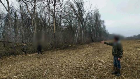 Мужчину насмерть придавило деревом в Саратовской области