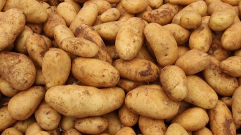 Житель Ртищева украл у пенсионерки 100 килограммов картошки