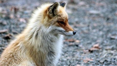 Ветеринарная служба разложила в лесах приманки с вакциной от бешенства