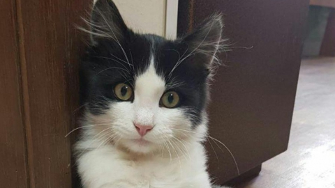 Главный ветеринар Саратова: Спасите собак из «Дорстроя», как мы спасли кота Тихона