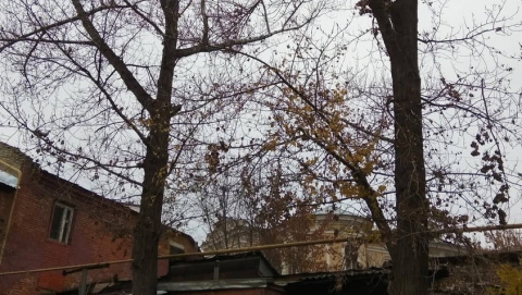 «Зеленая комиссия» Саратова отказала пенсионерам в сносе опасных деревьев
