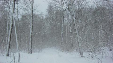Опять метель: в области продолжается снегопад