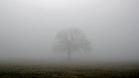 Туман опустился на Саратов и область