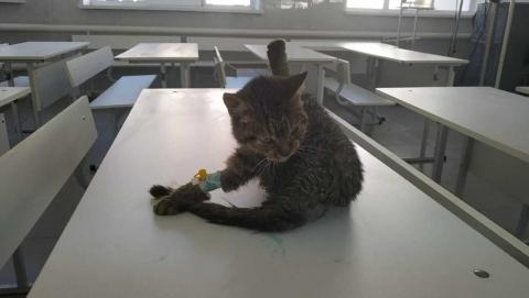 Саратовский дальнобойщик приютил кота, ради спасения которого проехал 500 километров