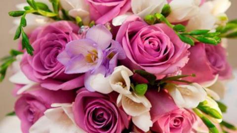 Балаковская администрация закупает цветов на полмиллиона