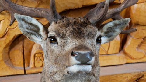 Четверо из пяти саратовских браконьеров уходят от ответственности