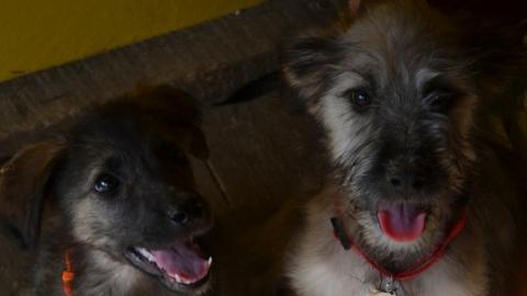 Сиденко пообещал не бросать бездомных собак