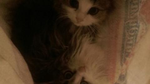 Кот в мешке: в Вольске котят завязали в упаковку из-под муки и выкинули
