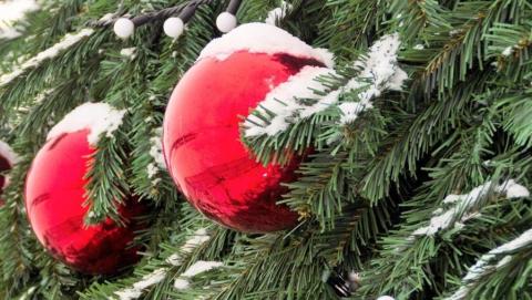 Правительство обещает саратовцам елки по 100 рублей