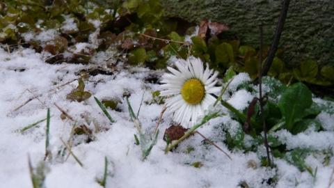 Зима в Саратовской области остается аномально теплой