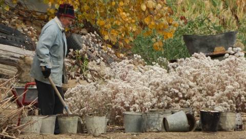 Самым пожилым работникам региона от 80 до 96 лет