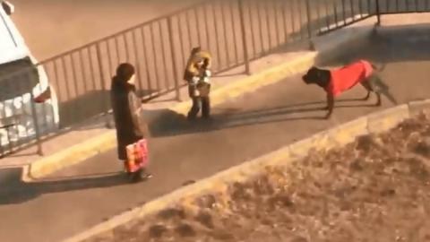 Собаки бросаются на ребенка с бабушкой - ВИДЕО