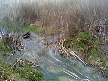 Михайловская птицефабрика обвиняет в загрязнении пруда конкурентов