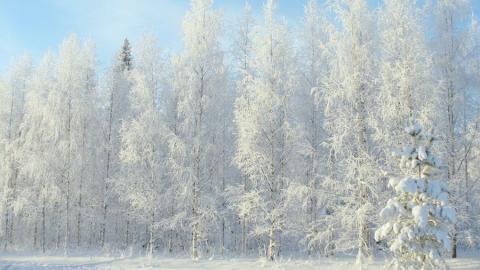 Похолодание пришло в Саратовскую область