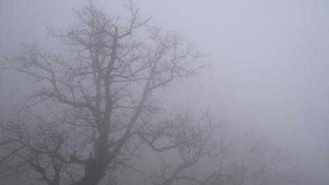 Саратовскую область ждет слабый ветер, но сильный туман