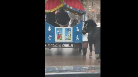 Саратовцев возмутило жестокое обращение с пони - ВИДЕО