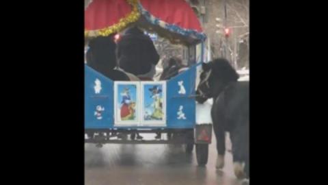 Полиция проверила сообщение о жестоком обращении с пони