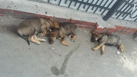 Саратовские чиновники ежегодно снижают выплаты за отлов бездомных собак