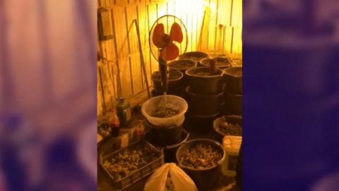 Полиция задержала садовода с 430 кустами марихуаны | Видео