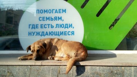 В Госдуме не оценили идею продавать бездомных собак в Корею и Китай