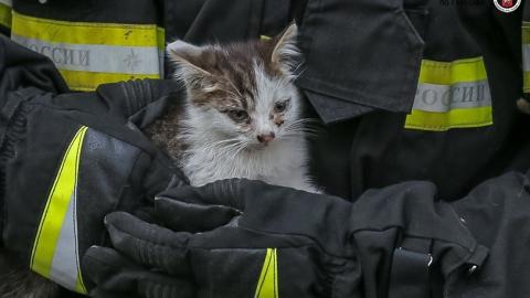 Спасателям пришлось лезть за кошкой по канату