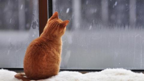 Саратовский мороз слабеет, снег умеренный