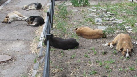 Бюрократия два года не дает решить проблему бродячих собак