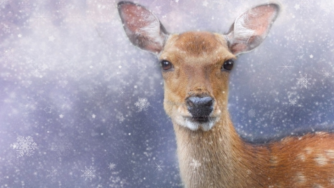 Полиция поймала браконьеров на снегоходах