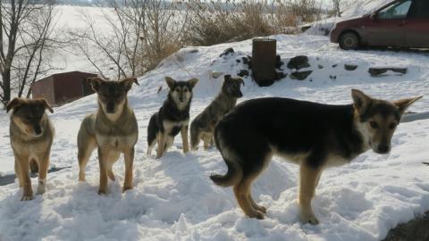 Алексей Частов: В первую очередь покусать может собака, у которой есть хозяин